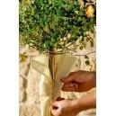 Protection pour tronc de plantes hautes