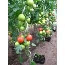 Set de 10 tuteurs pour tomates en acier