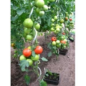 Set de 5 tuteurs à tomates en aluminium